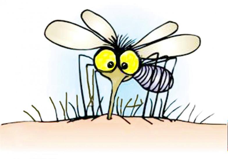 Mosquito. Imagen principal