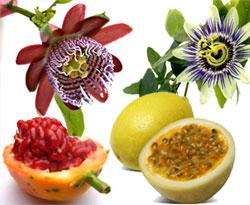 Flor y Maracuyá