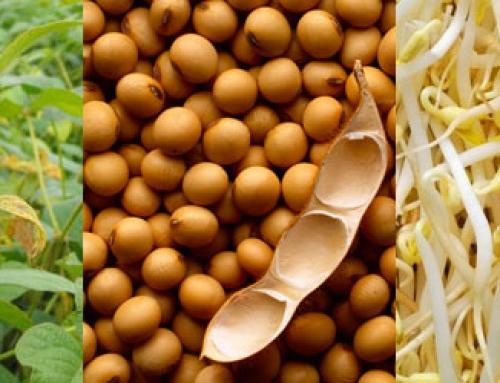 La Soja: Beneficios y propiedades