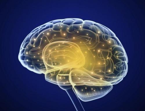 Cómo mantener el cerebro en forma